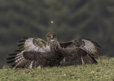 Combat Buse variable